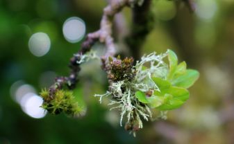 lichen on apple tree